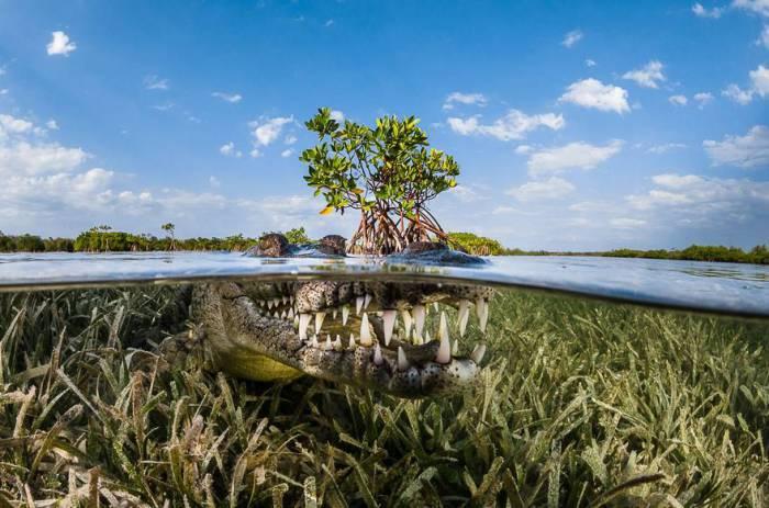 Мангровая роща, Куба. Автор фотографии: Грег Лекоур (Greg Lecoeur).
