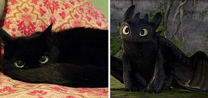 У кота тот же окрас, тот же цвет глаз… чем не прототип для черного дракона?