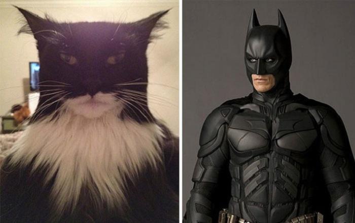 Большой и серьезный кот с окрасом в виде маски супергероя.