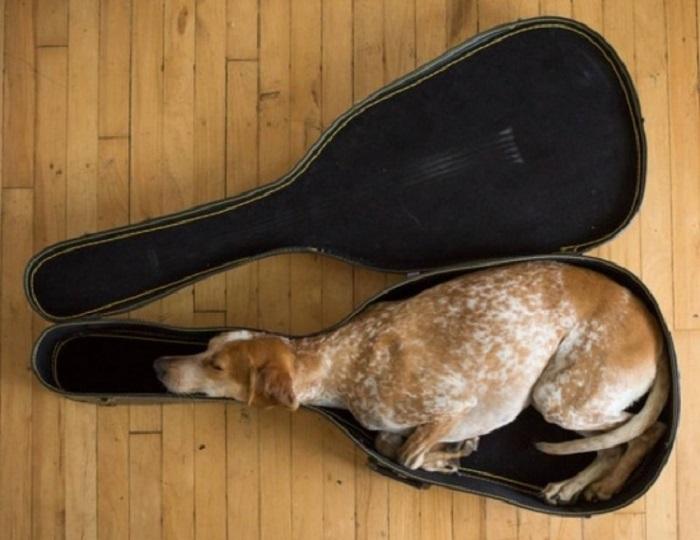 Спящий пёсик в кофре.