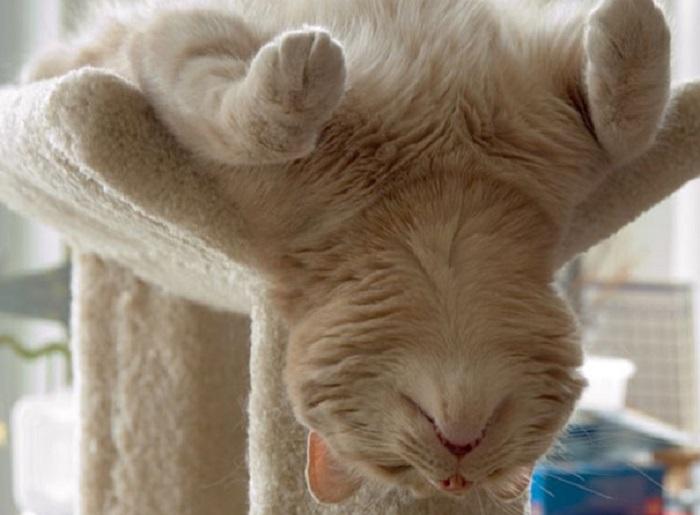 Уснувшие пушистые очаровашки.