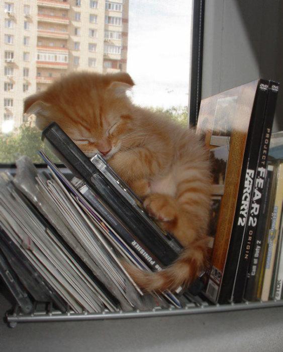 Котенок, которые очень любит слушать музыку.