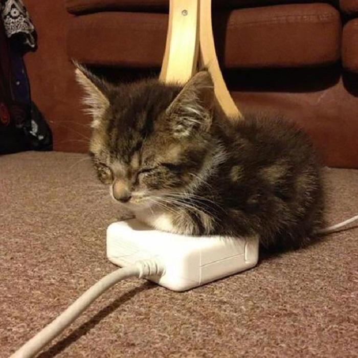 Котята всегда находят самые тёплые места.