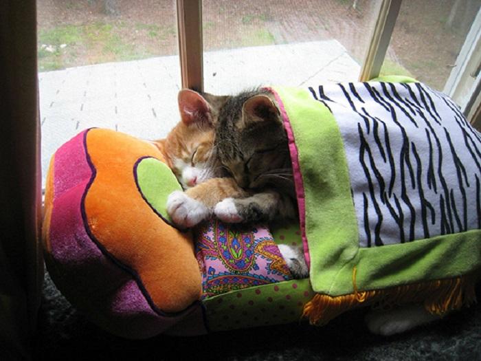 Очаровательные спящие котята, которых сон застал на ходу.