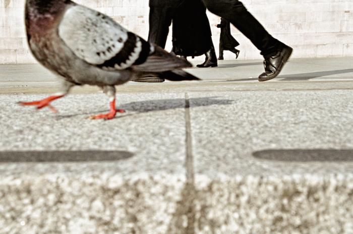 Голуби также спешат по своим птичьим делам.