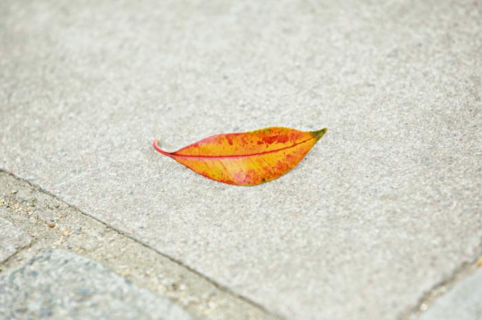 В объективе настоящего фотографа даже обычный листок может выглядеть поистине красивым.