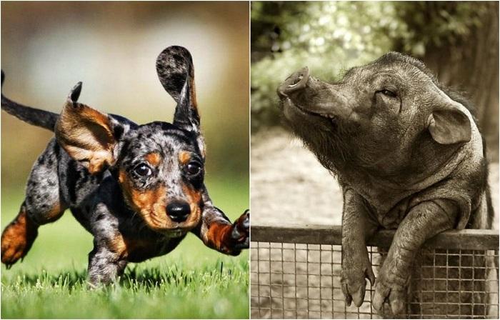 Животные, которых сфотографировали в самый неожиданный момент.