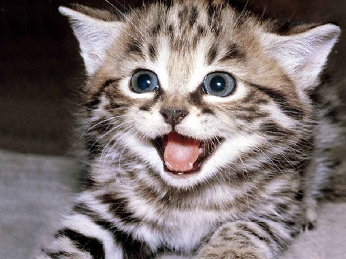 Улыбчивые коты и кошки, которые умеют радоваться жизни.