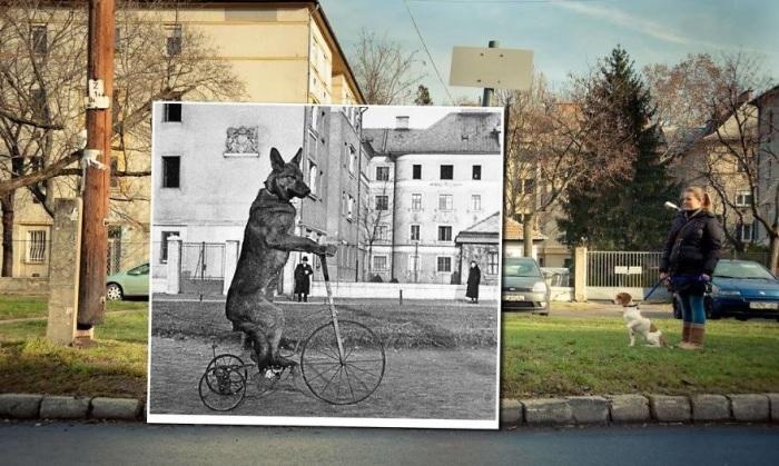 Малозаметные улочки старого города. 1938 - 2014 года.