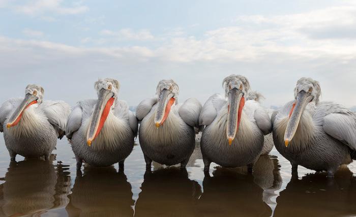 Морские птицы выстроились в один ряд. Автор фотографии: Adit Merkine, Израиль.