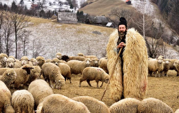 Пастух в бурке окружен своим стадом. Автор фотографии: Gutescu Eduard, Румыния.