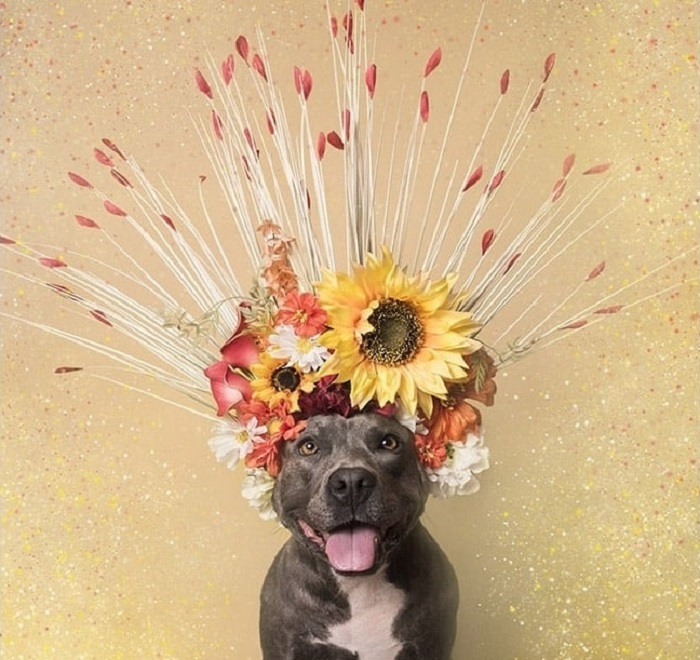 Бойцовская собака в проекте Flower Power – «Сила цветов».