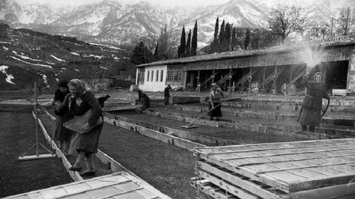 Колхозники Крымской области в артели им. Калинина в 1954 году.