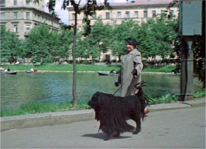 Нередко можно было встретить собачников в парках.