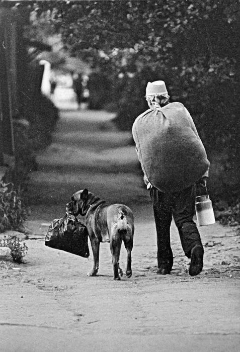 Пес помогает хозяину нести вещи.