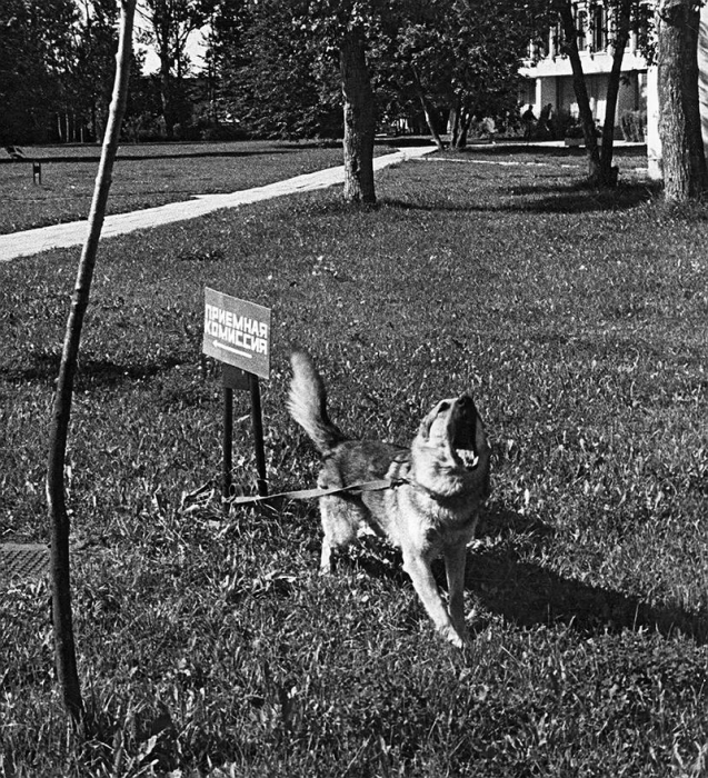 Собака громко взывает к хозяину, привязанная к табличке.