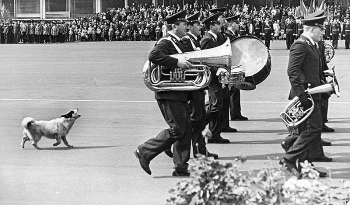 Первомайская демонстрация в сопровождении военно-духового оркестра и собаки, подвывающей в такт.