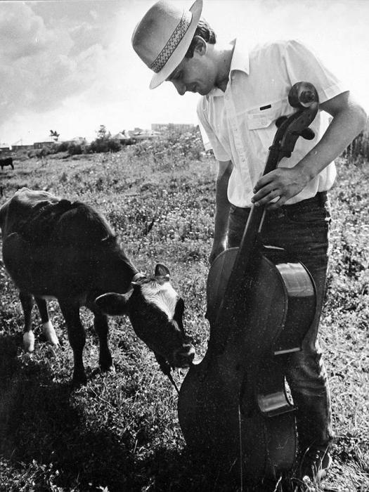 Коза тыкает носом в музыкальный инструмент, как будто хочет еще послушать музыку.