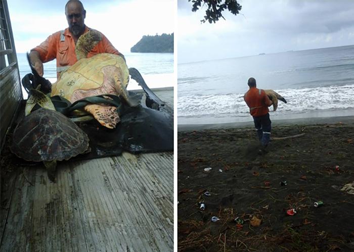 Добрый человек покупает черепах на продовольственном рынке и отвозит к морю.