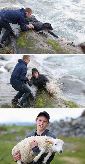 Два норвежских паренька спасли молодого козленка, который тонул в океане.