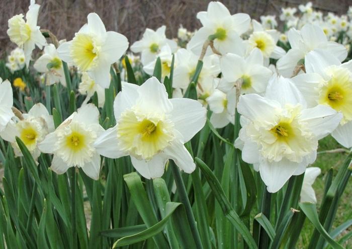 Нарцисс - в греческой мифологии прекрасный юноша.