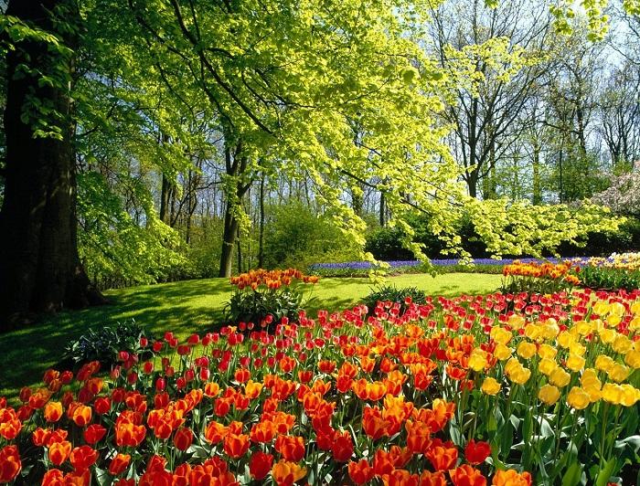 Весенние украшение парковой зоны-тюльпаны.