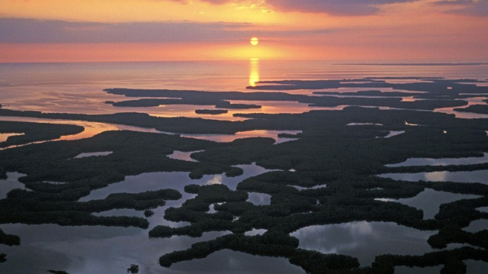 Лабиринт мангровых островов и водных путей.
