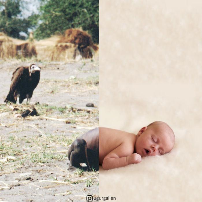 Известный снимок Кевина Картера с умирающей от голода девочкой, за которой следит гриф, скомпонован с мирно спящим младенцем.