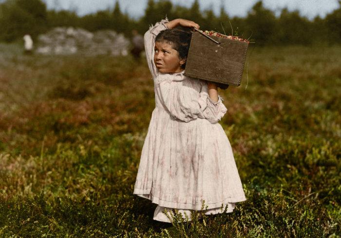 8-летняя малышка Дженни Камилло занимается сбором клюквы.