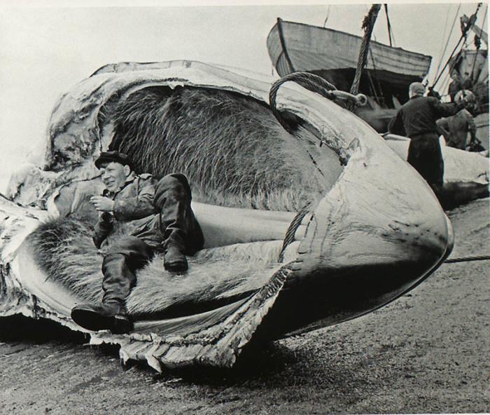 Мужчина отдыхающий в челюсти кита.
