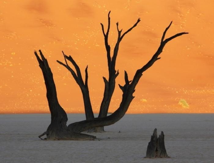 Островам мертвых деревьев верблюжьей акации насчитывается около 900 лет.