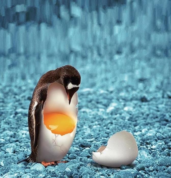 С помощью графического редактора можно легко соединить пингвина с яйцом и получить новый вид – хрупкогвина!