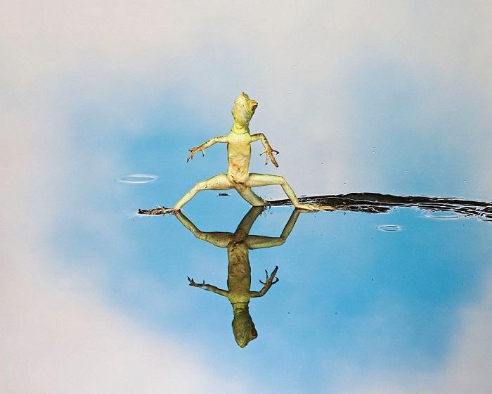 Рептилия отрабатывает лучшие движения.