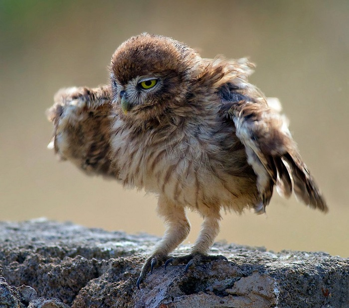 На первом уроке танцев для сов.