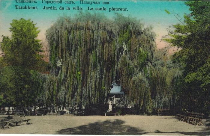 Городской сад Ташкента.