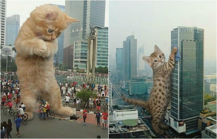 Гигантские коты «встроенные» в городские пейзажи.
