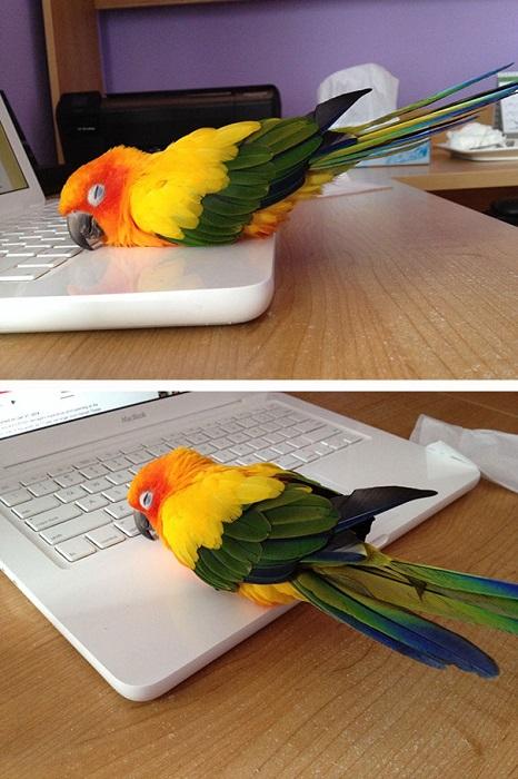 Уютное тёплое местечко на ноутбуке.