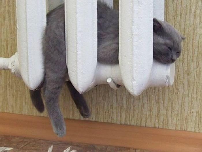 Котенок греется на батарее.