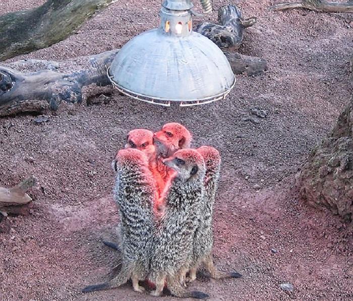 Забавные животные, которые любят погреться в самых неожиданных местах.