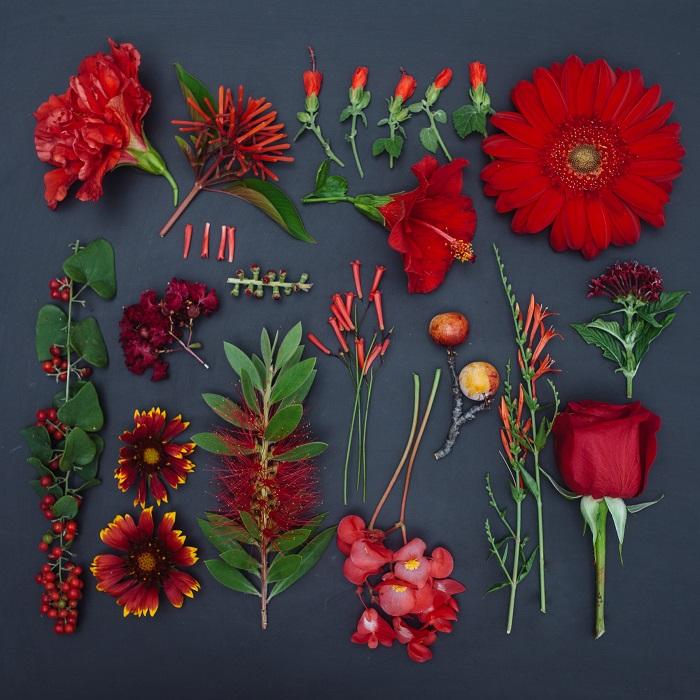 Красные цветы - это символы любви, страсти, заботы. Фотограф - Emily Blincoe.