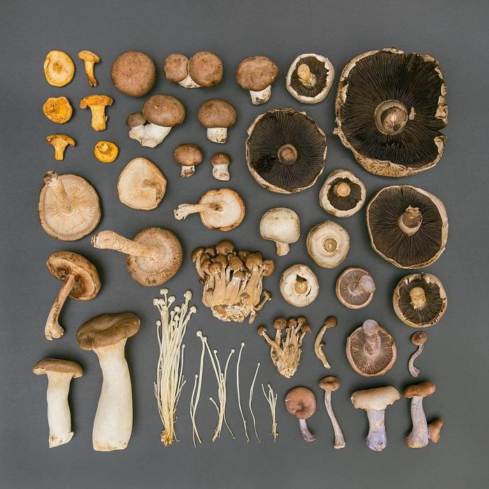 В лесу столько самых разных грибов, которые так и хочется сорвать, но внимательность превыше всего, чтобы в лукошке не оказались и ядовитые грибы.