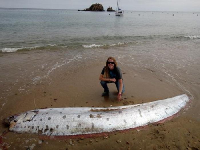 Редкая 13-футовая морская змея была найдена на острове Санта-Каталина в Калифорнии.