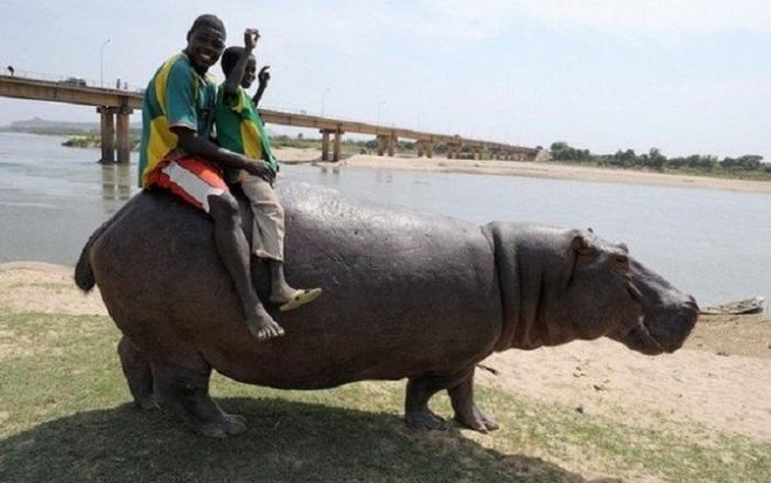 Как они смогли приручить самое опасное животное Африки?