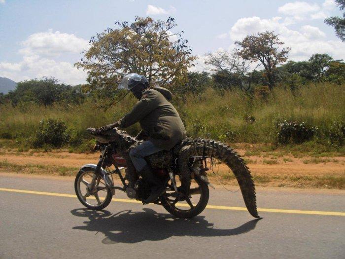 Мамонты давно вымерли, а вот крокодилы в Африке еще остались...