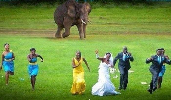 А слон всего лишь спешил, чтобы не опоздать на съемку…