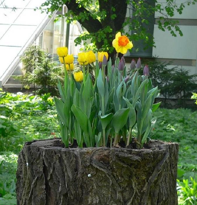 Только своими руками можно создать эффектный и уютный сад.