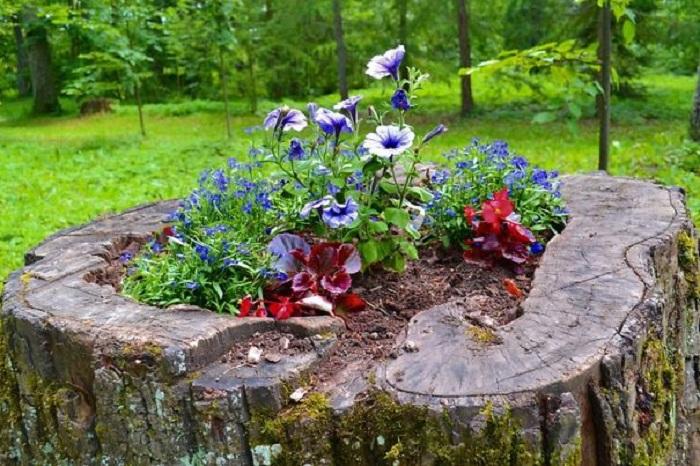 Лучше всего выбирать растения из числа низкорослых или ампельных культур.