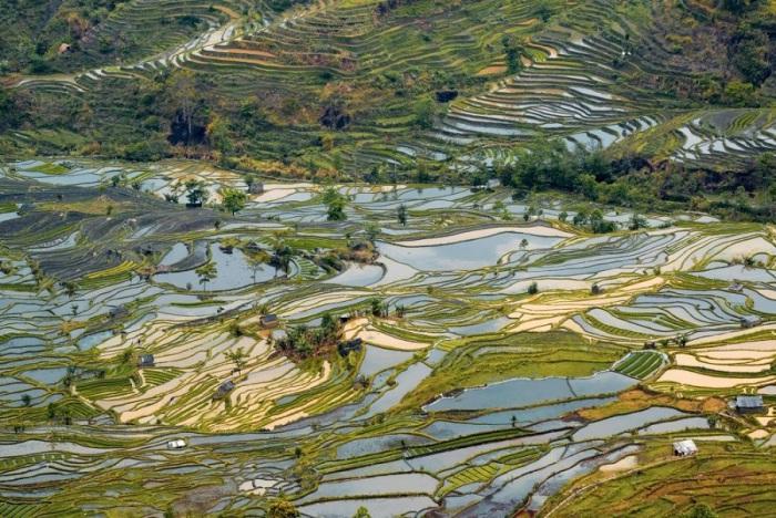 Рисовые поля простираются в длину на десятки километров и повсеместно повторяют контуры горных склонов, сохраняя природный ландшафт необыкновенной красоты.