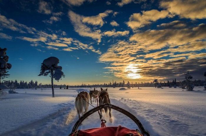 Езда на собачьих упряжках в Швеции.