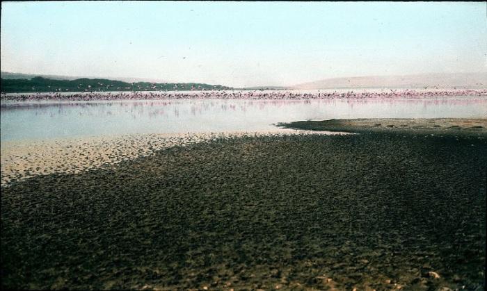В хорошую погоду, огромные стаи гордых розовых фламинго создают кружевное розовое живое покрывало, а воздух над озером просто дрожит от птичьего гомона.
